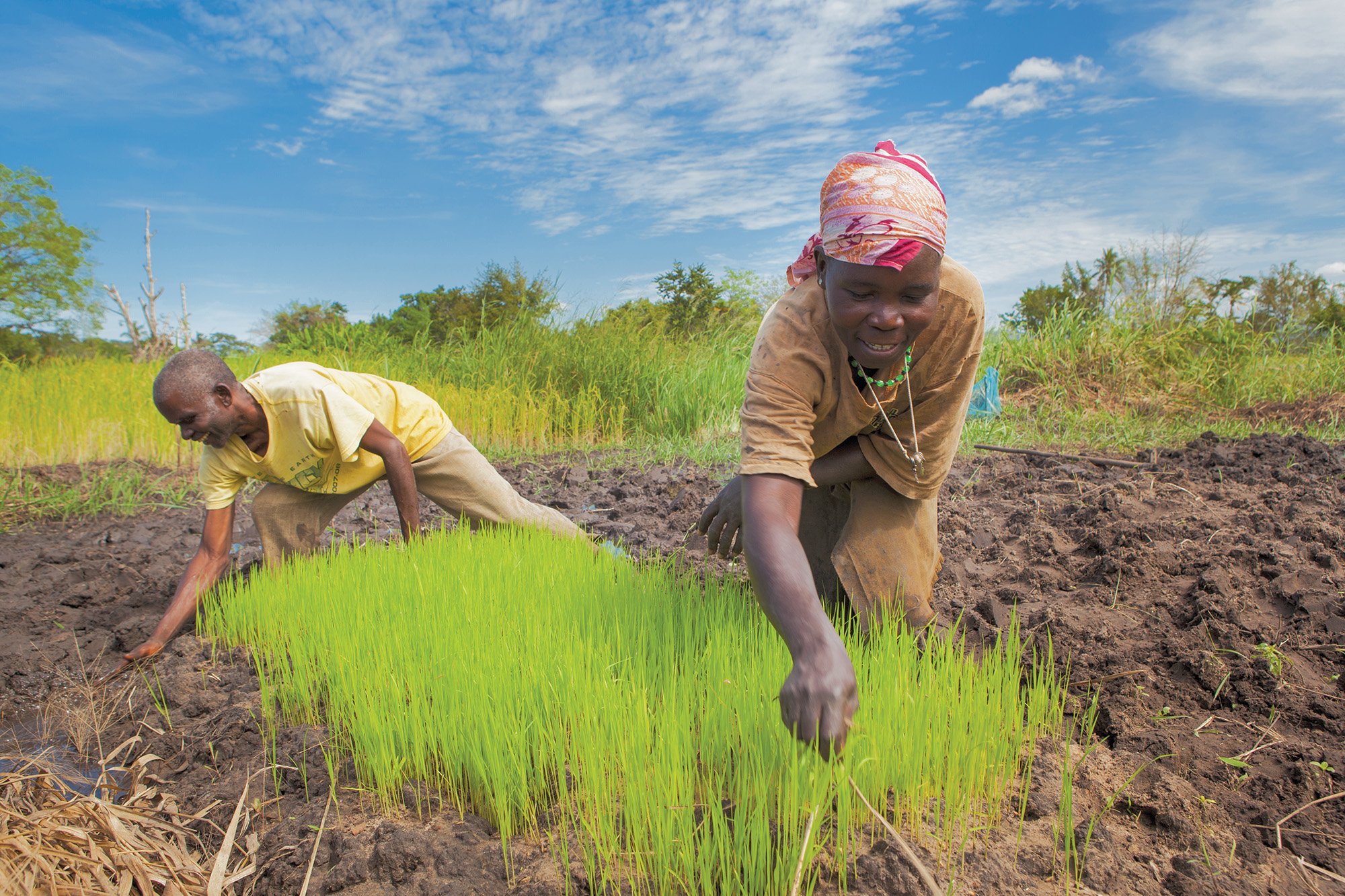 Agriculture and food security in Tanzania   Aga Khan